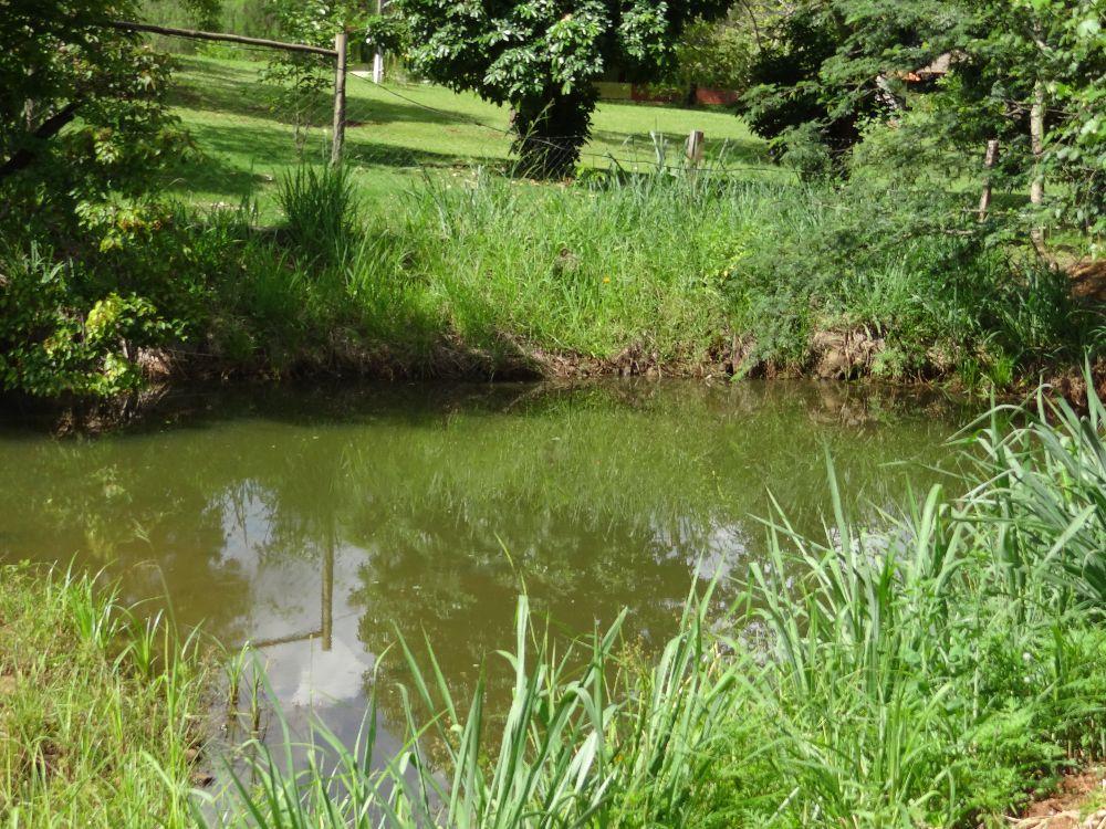 Imagem3:Área Rural para Venda em Arapongas