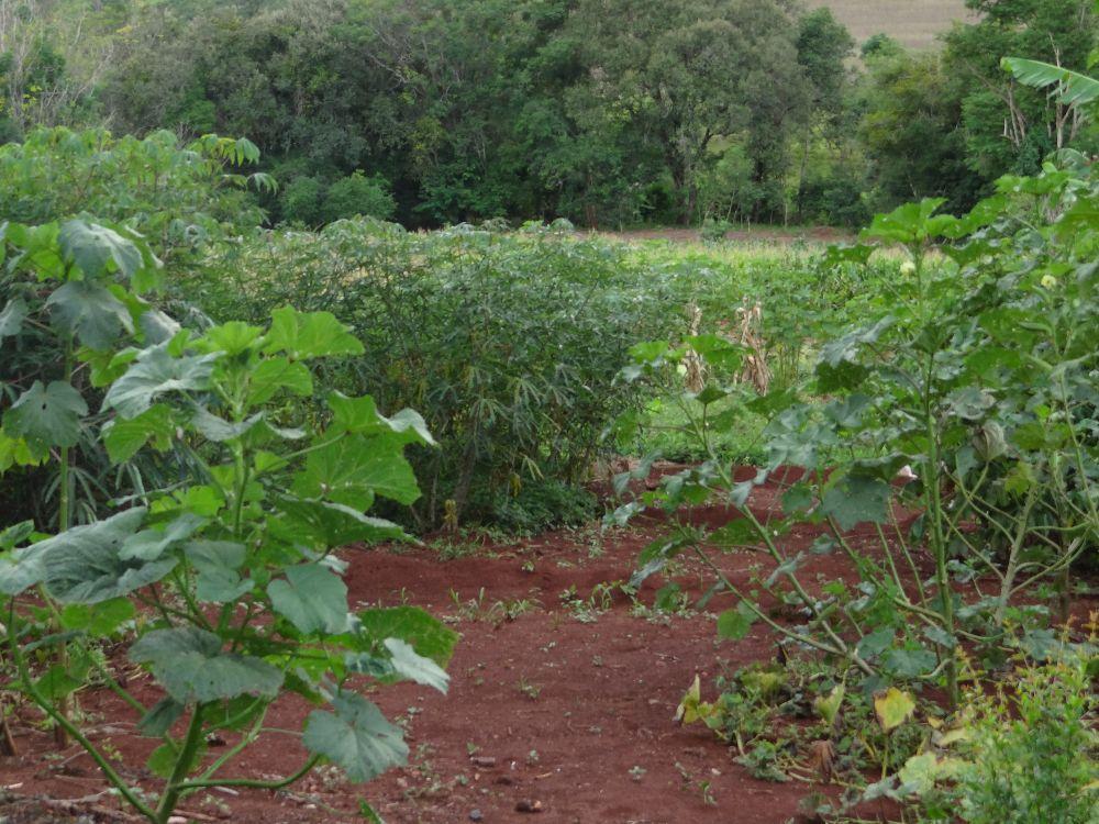 Imagem5:Área Rural para Venda em Arapongas