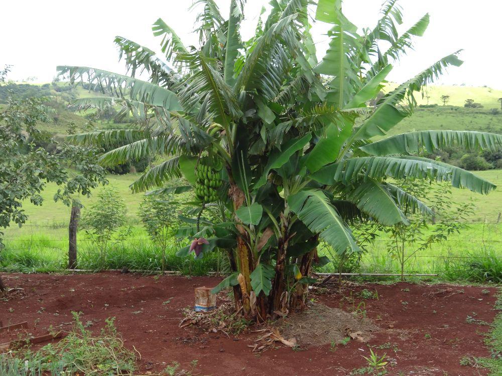 Imagem6:Área Rural para Venda em Arapongas