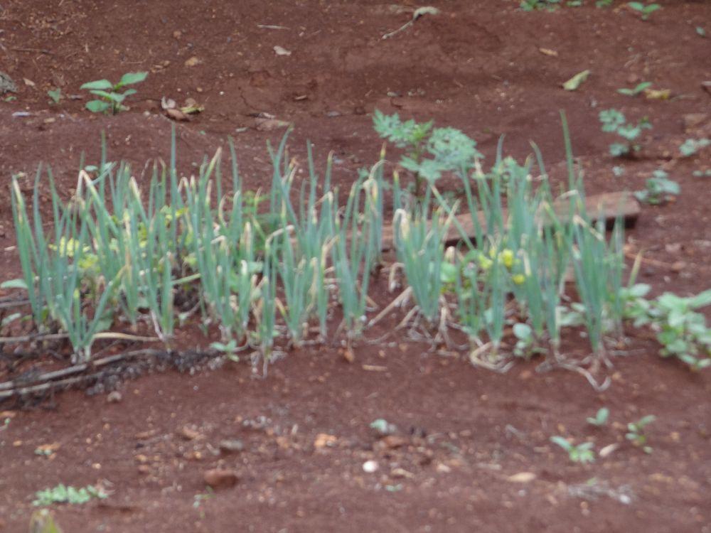 Imagem7:Área Rural para Venda em Arapongas