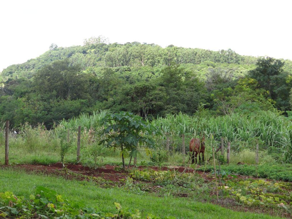 Imagem11:Área Rural para Venda em Arapongas
