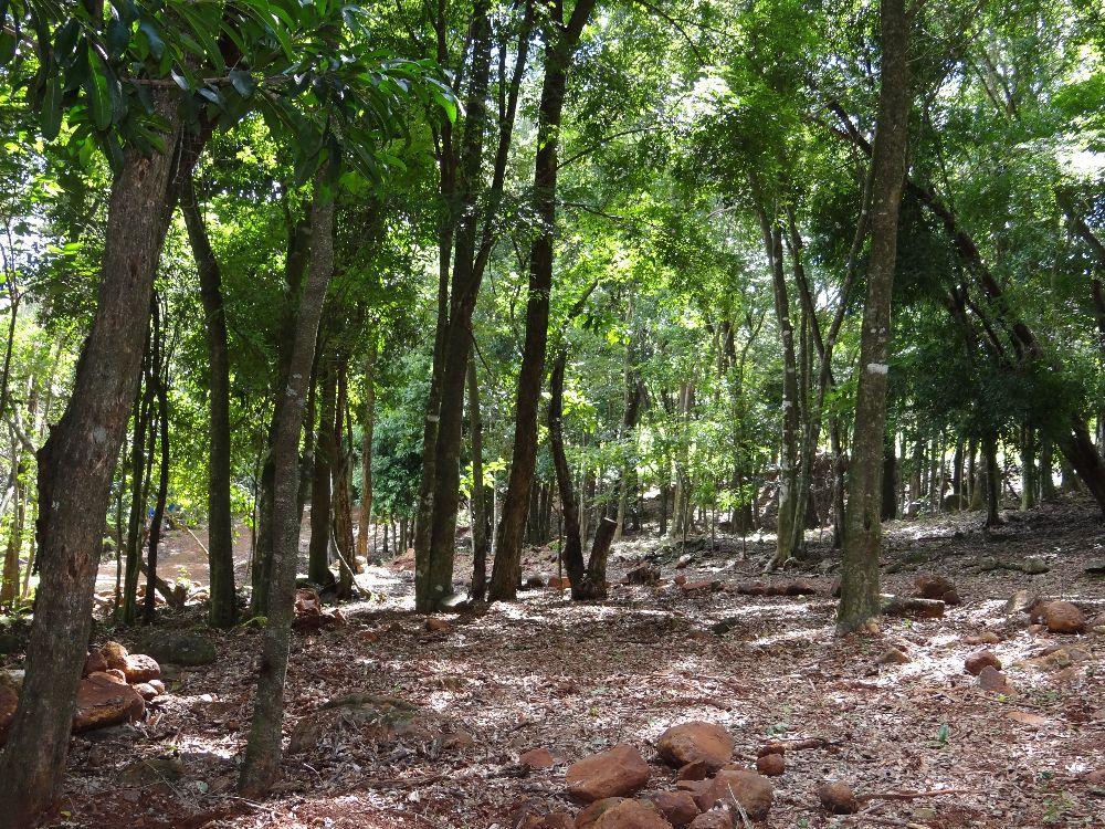 Imagem13:Área Rural para Venda em Arapongas